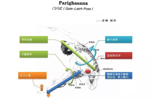 如何避免瑜伽伤害|侧屈与侧弯类练习