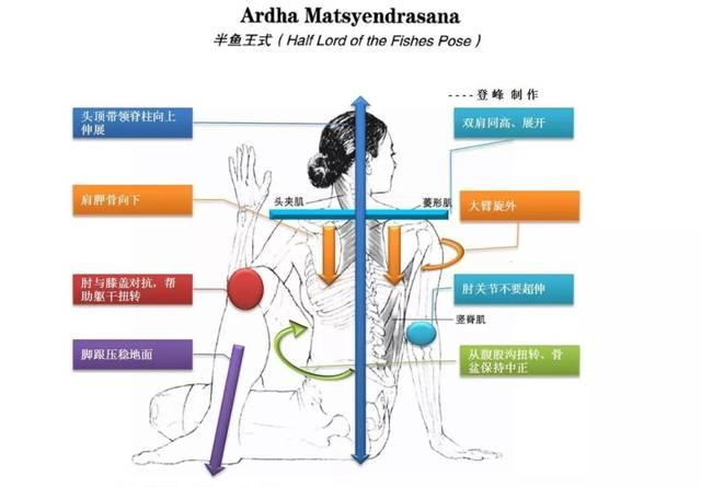 如何避免瑜伽伤害|后弯类练习